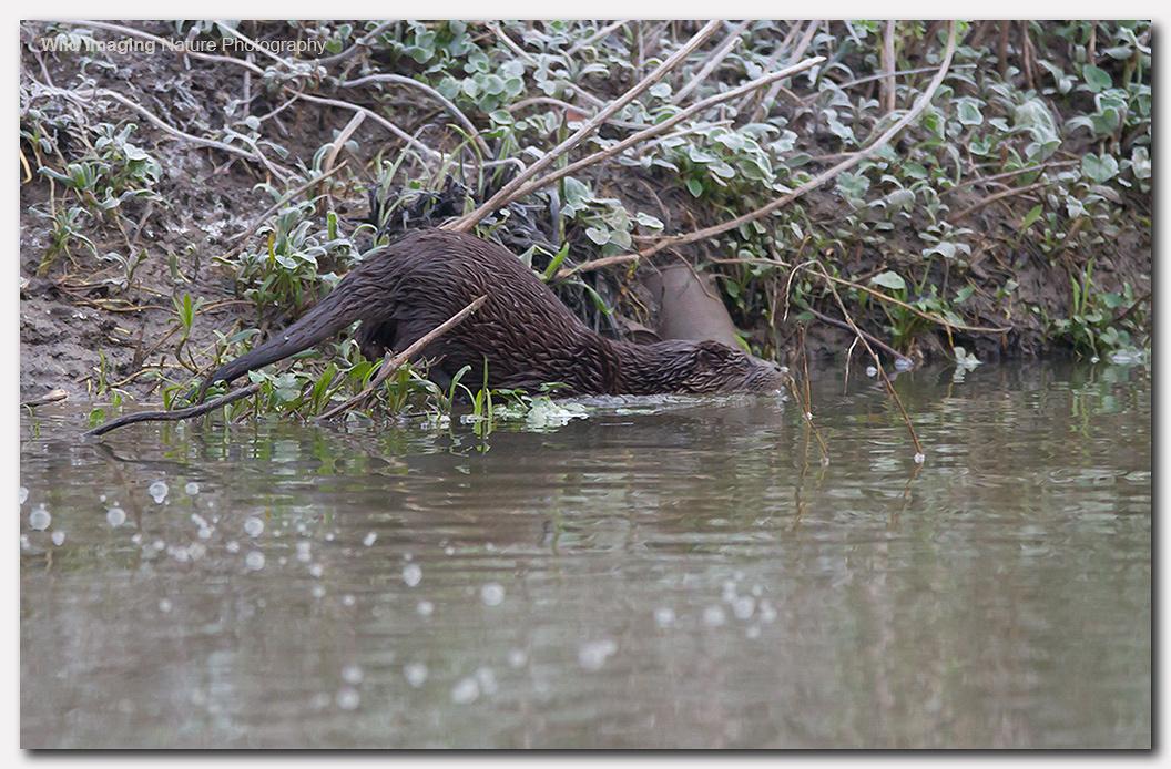 Otter 5