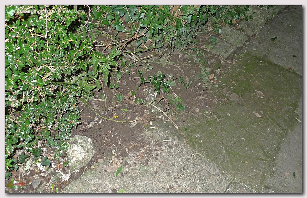 Mystery garden diggings