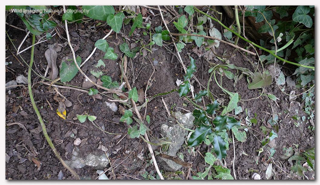 Mystery Diggings 2