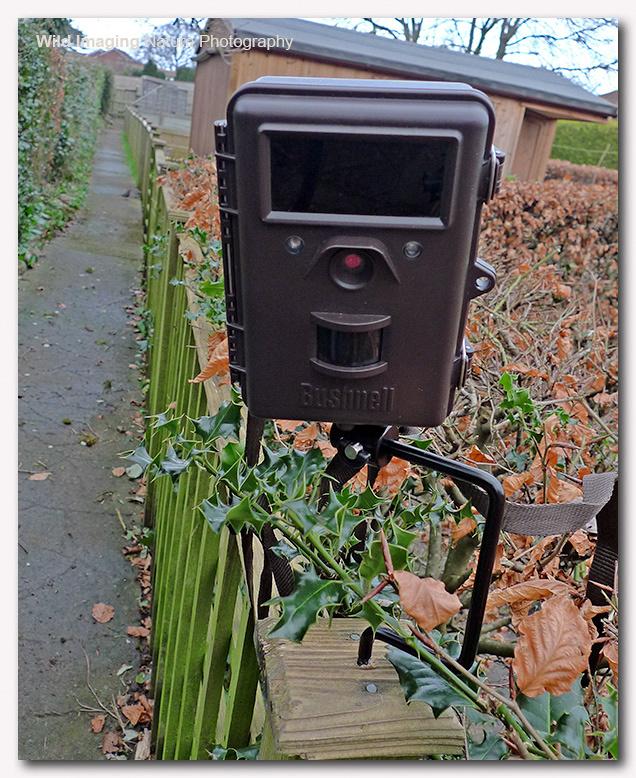 Bushnell Trailcam on Bracket