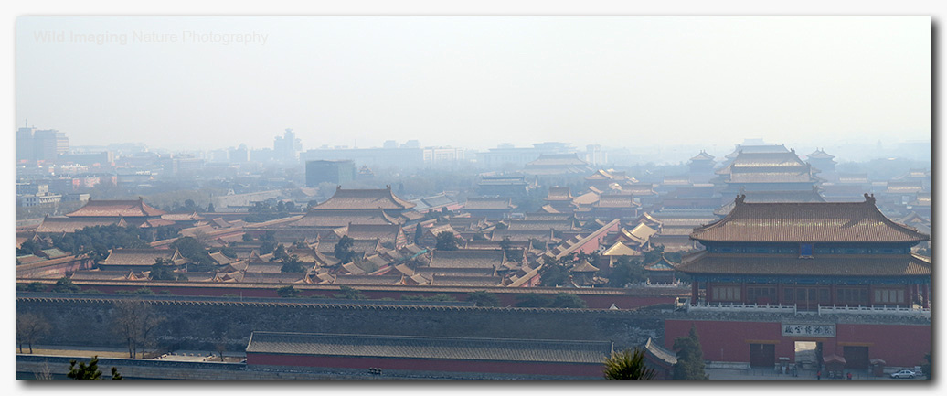 Forbidden City in the Smog