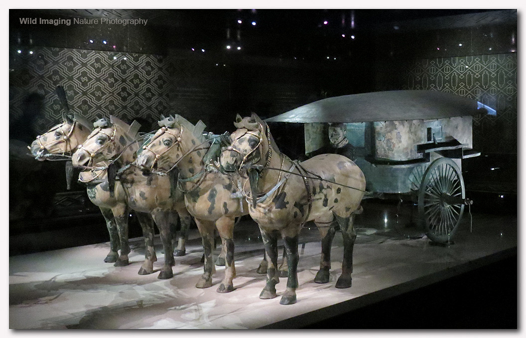 Bronze Chariot and Horses 4